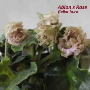 Ablon's Rose