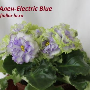 Ален-Electric Blue (Вольская А.)