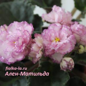 Ален-Матильда (Вольская А.)