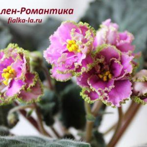 Ален-Романтика (Вольская А.)