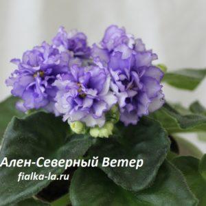 Ален-Северный Ветер (Вольская А.)