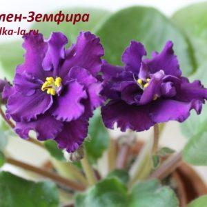 Ален-Земфира (Вольская А.)