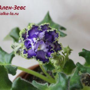 Ален-Зевс (Вольская А.)