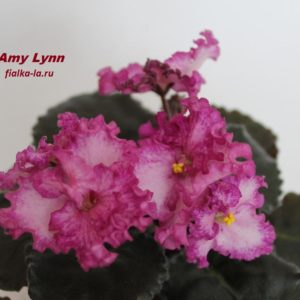 Amy Lynn (Harrington)