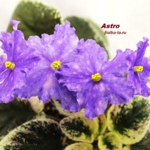 Astro (Croteau)