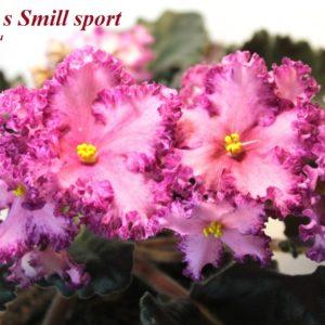 "Austin""s Smill sport"