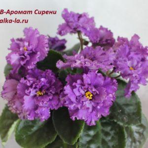 АВ-Аромат Сирени (Тарасов)