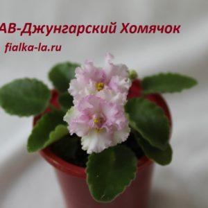 АВ-Джунгарский Хомячок