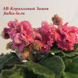 АВ-Коралловый Замок (Фиалковод)
