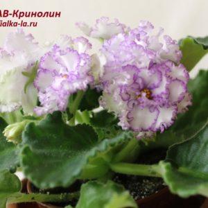 АВ-Кринолин (Фиалковод)