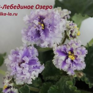 АВ-Лебединое Озеро (Фиалковод)