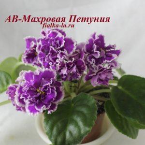 АВ-Махровая  Петуния (Фиалковод)