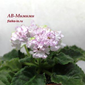АВ-Мимими (Фиалковод)