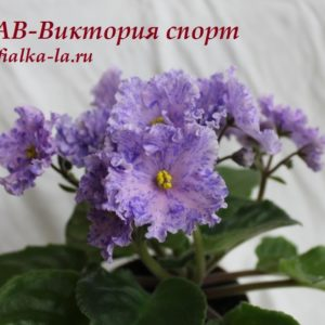 АВ-Виктория (Фиалковод)