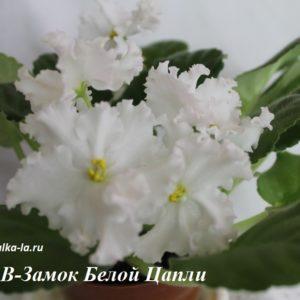 АВ-Замок Белой Цапли (Фиалковод)