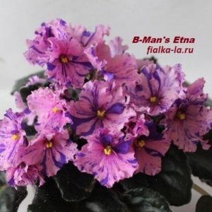 B-Man's Etna (Curcuruto)