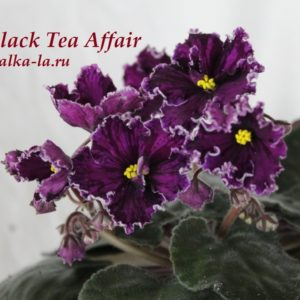 Black Tea Affair (Sorano)