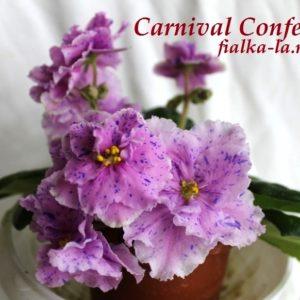 Carnival Confetty (LLG)