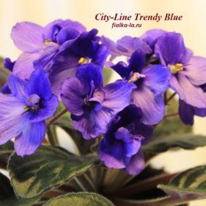 City-Line Trendy Bluе (Промышленный)