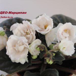 ДЕО-Марципан (Аксёнкина О.)