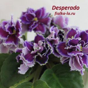 Desperado (Sorano)