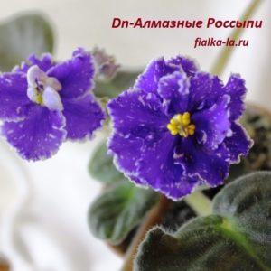 DN-Алмазная Россыпь  (Денисенко Д.)