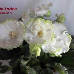 DN-Lorien  (Денисенко Д.)