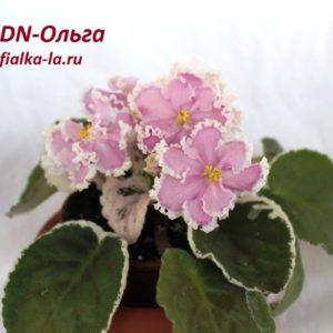 DN-Ольга  (Денисенко Д.)