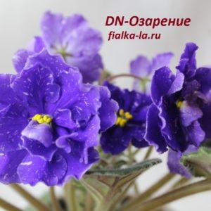 DN-Озарение  (Денисенко Д.)
