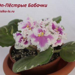 DN-Пёстрые Бабочки  (Денисенко Д.)
