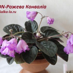 DN-Рожева  Конвалiа  (Денисенко Д.)