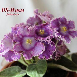 DS-Изюм (Еникеева)
