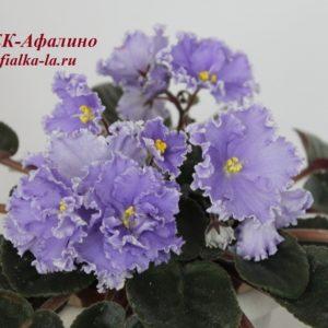 ЕК-Афалино (Коршунова Е.)