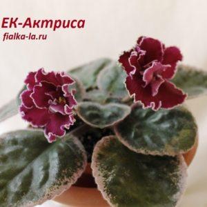 ЕК-Актриса (Коршунова Е.)