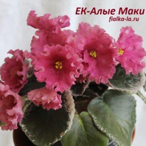 ЕК-Алые Маки (Коршунова Е.)