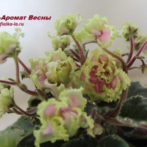 ЕК-Аромат Весны (Коршунова Е.)