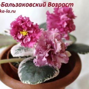 ЕК-Бальзаковский Возраст (Коршунова Е.)