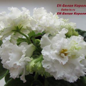 ЕК-Белая Королева (Коршунова Е.)