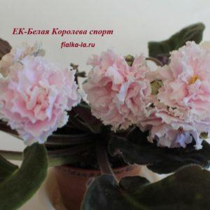 ЕК-Белая Королева (Sport) (Коршунова Е.)
