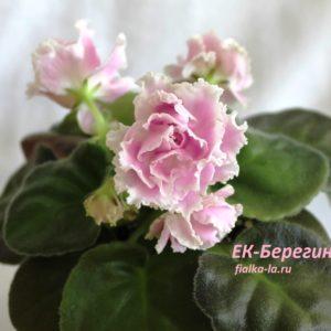 ЕК-Берегиня (Коршунова Е.)