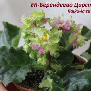 ЕК-Берендеево Царство (Коршунова Е.)
