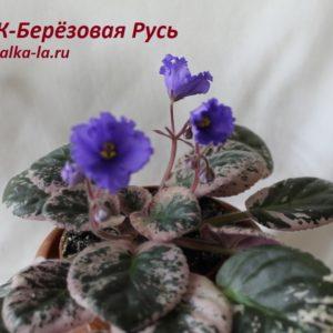 ЕК-Берёзовая Русь (Коршунова Е.)