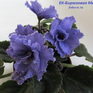 ЕК-Бирюзовая Медуза (Коршунова Е.)