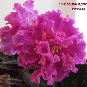 ЕК-Богиня Красоты (Коршунова Е.)