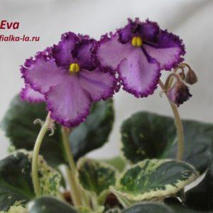 Eva (Sorano)