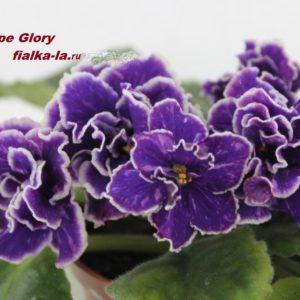 Grape Glory (Sorano)