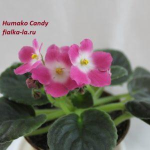 Humako Candy (Humako)