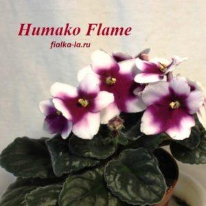 Humako Flame (Humako)