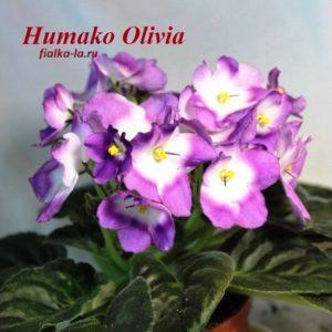Humako Olivia (Humako)