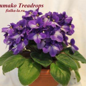 Humako  Treardrops (Humako)